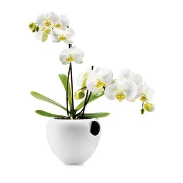Eva Solo - Orchideentopf