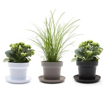 Authentics - Green Pflanztopf, weiss, grau, schwarz - Pflanzen