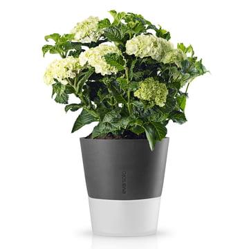 Eva Solo - Blumentopf Ø 25 cm stone grey, mit Blumen