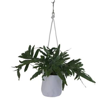 Trimm Copenhagen - Single Flowerpot