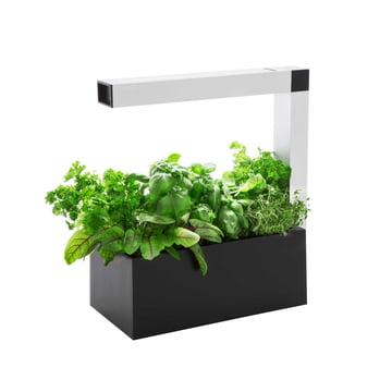Tregren - Herbie Indoor Garden - schwarz