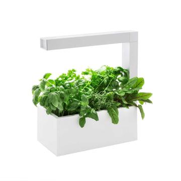 Tregren - Herbie Indoor Garden - weiss