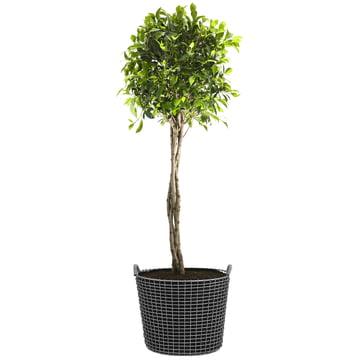 Classic 50 Drahtkorb von Korbo mit Plant Bag