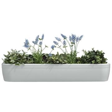 Der windowgreen Fensterbank Blumenkasten von rephorm in weiss