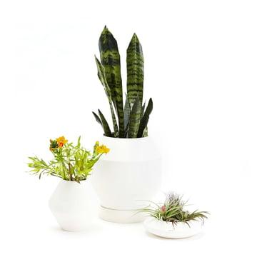 Areaware - Radial Vessels Vase