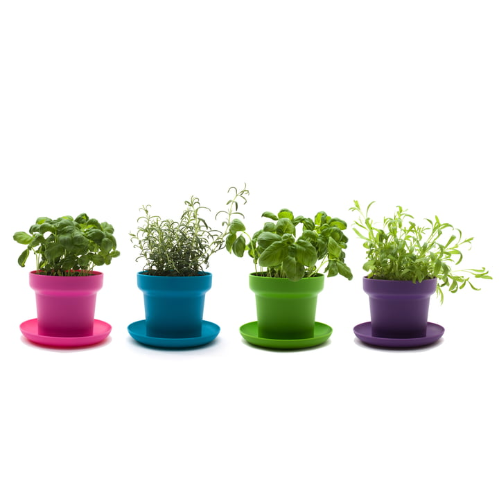 Authentics - Green Pflanztopf, grün, türkis, pink, lila Pflanzen