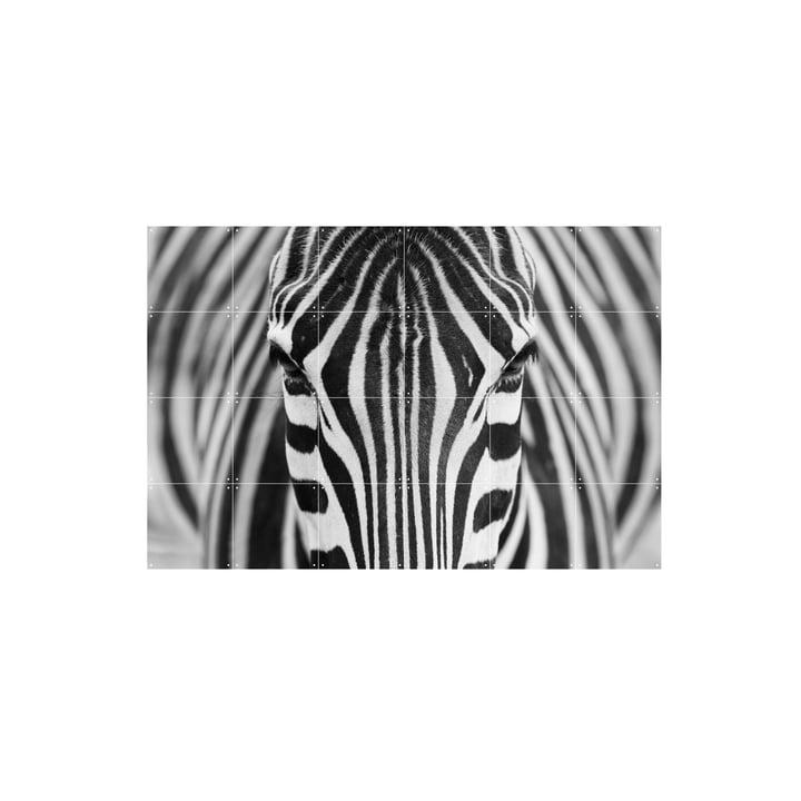 Zebra von IXXI in 120 x 80 cm