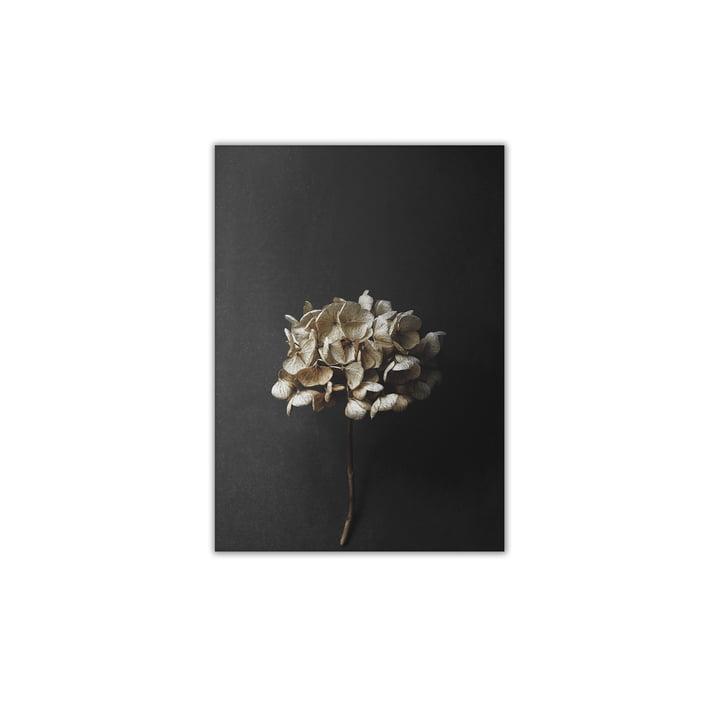 Stillleben 04 (Hydrangea) 30 x 40 cm von Paper Collective