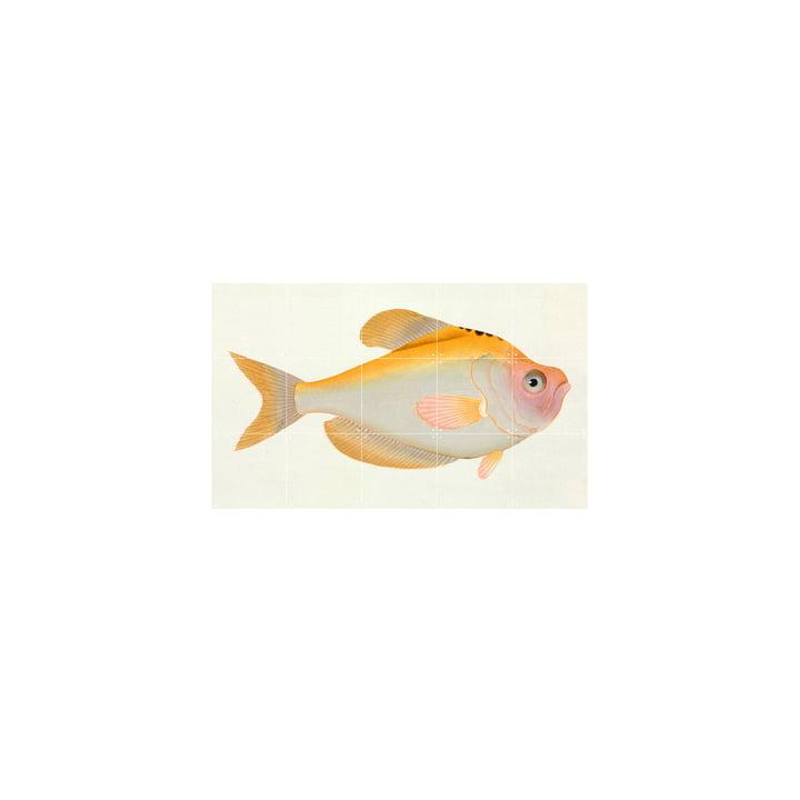 Gelber Fisch (Bloch) 100 x 60 cm von IXXI