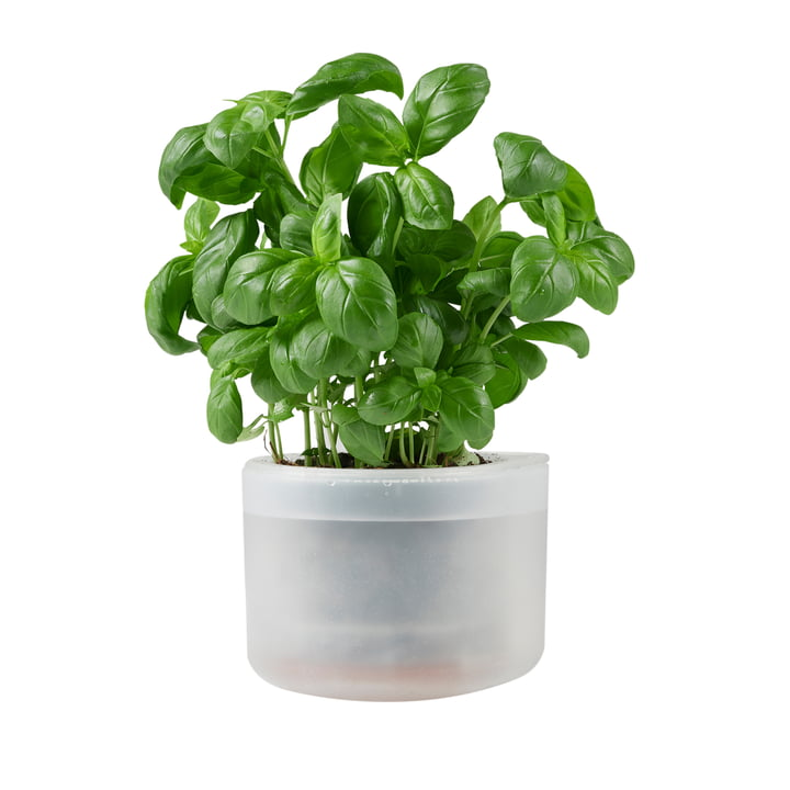 Till Planter Small, transparent von Boskke
