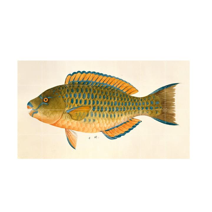 Green Fish Wandbild von IXXI in der Grösse 140 x 80 cm