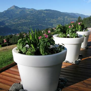 Bloom Pot ohne Beleuchtung, Berge im Hintergrund