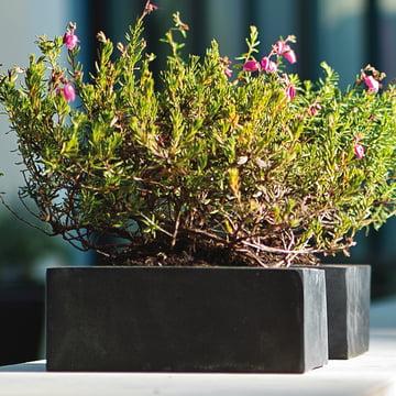 amei - Der Quadratische Pflanzgefäss, Ambiente2, schwarz