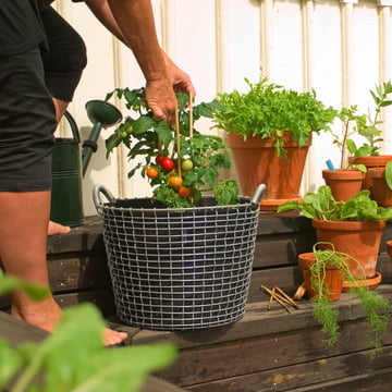 Drahtkorb mit Plant Bag für Tomaten