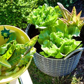 Drahtkorb mit Plant Bag für den Garten