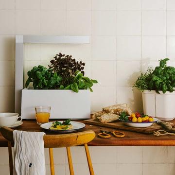 indoor gardening ideen tipps blog. Black Bedroom Furniture Sets. Home Design Ideas