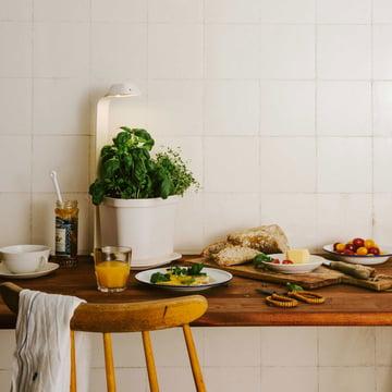Tregren - Genie Kitchen Garden