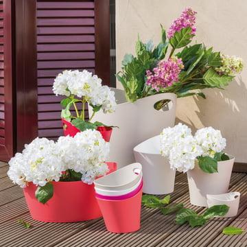 Blumentöpfe in verschiedenen Grössen