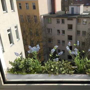 Der windowgreen Fensterbank Blumenkasten von rephorm