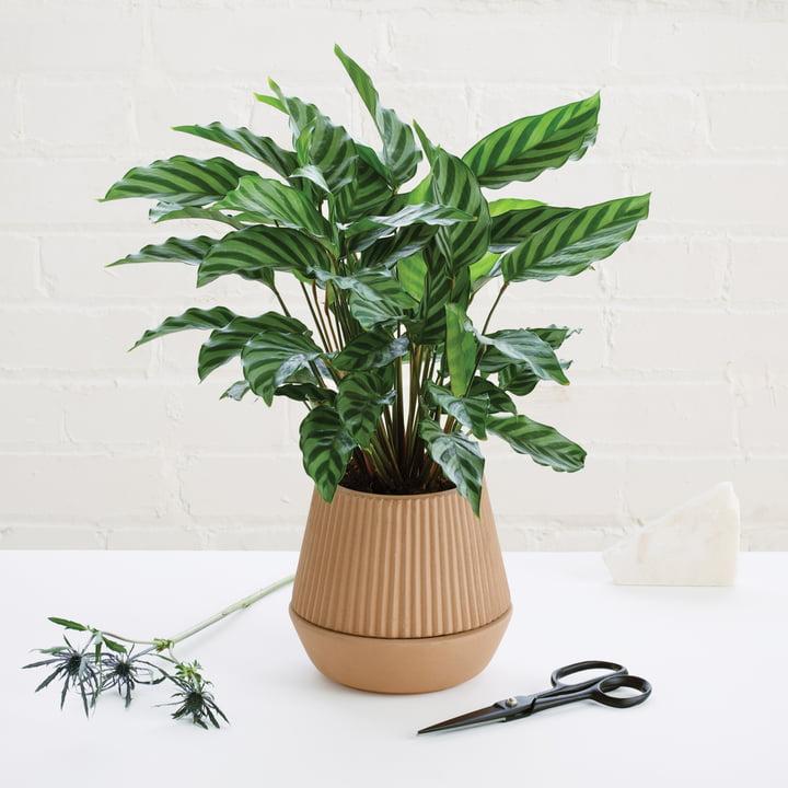 Umbra - Pleated Pflanzenbehälter, Steingut