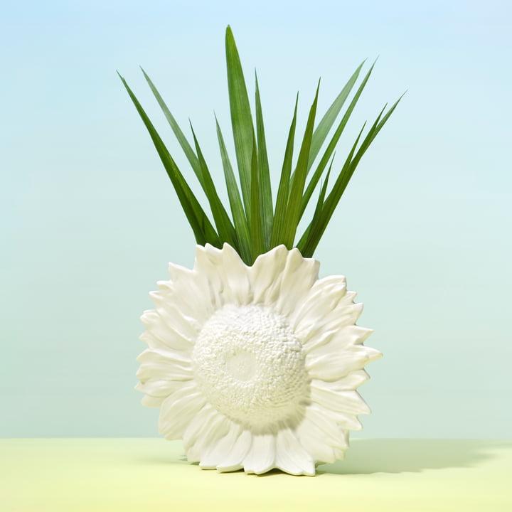 Areaware - Sunflower Vase, weiss