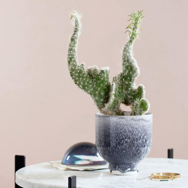 Trend Pflanzen Deko Tipps Connox Magazine
